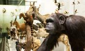 Zoologisches Museum der Universität Zürich